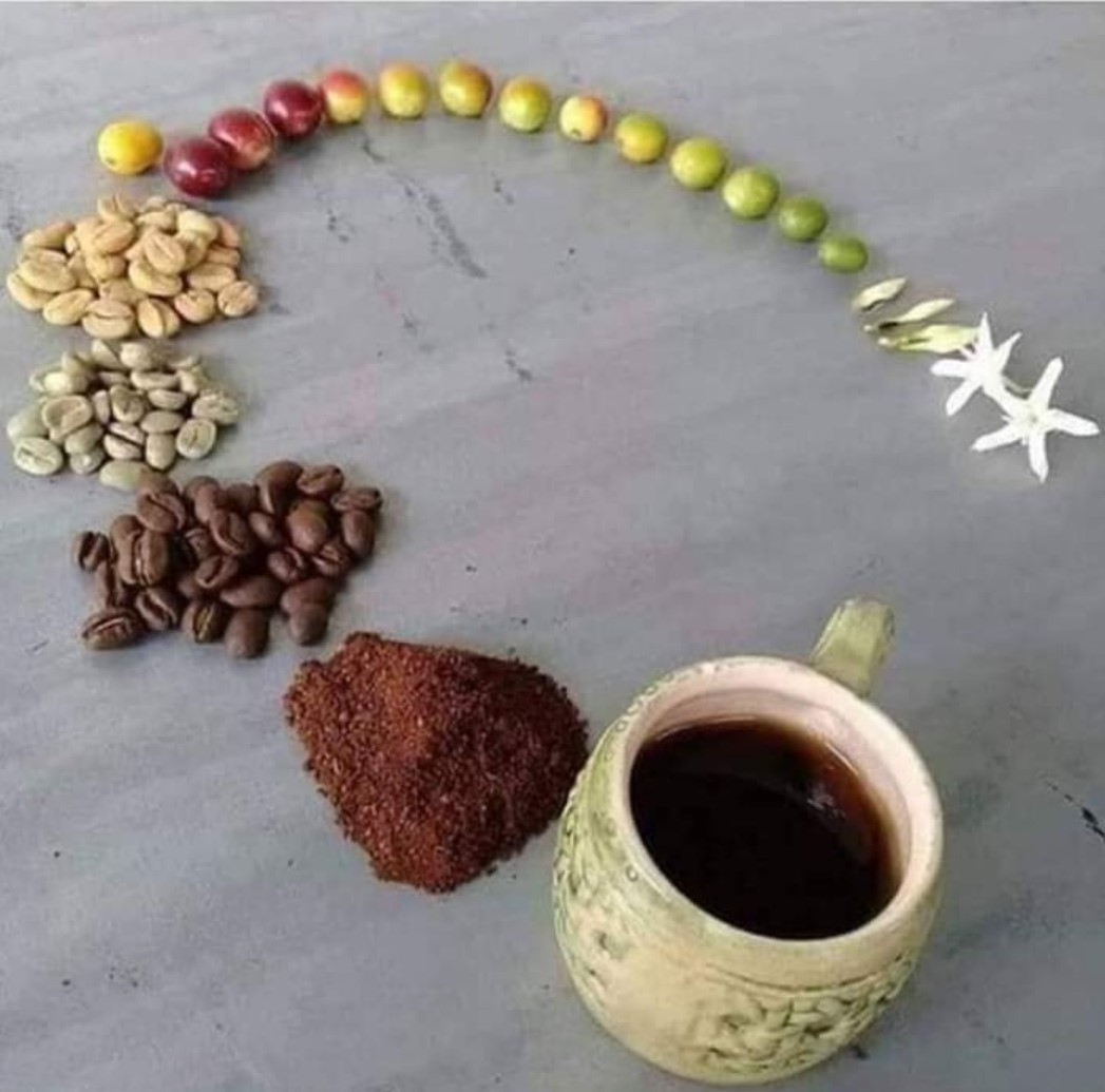 From Flower To Cup